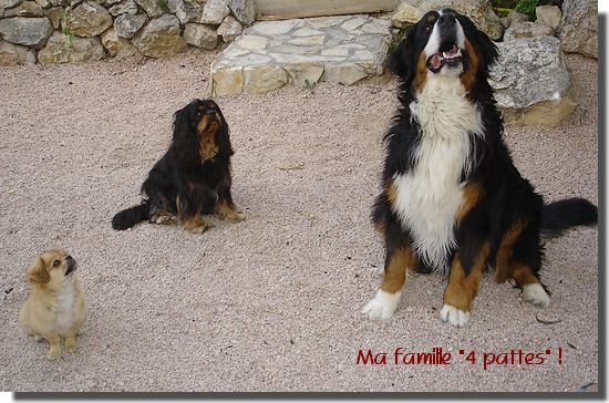 famille_4_pattes_1a.jpg